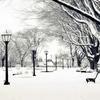 哈尔滨午后的冬天-EP