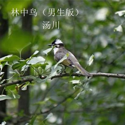 动物森林歌词简谱