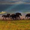 马头琴与蒙古草原天籁