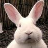 勤思師太有只獨個兔