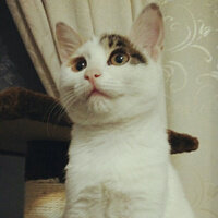 菖蒲艾草的茱萸