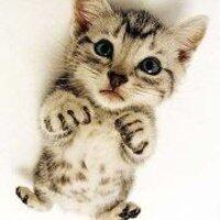 o0爱猫0o