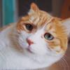 Meow(⊙ω⊙)