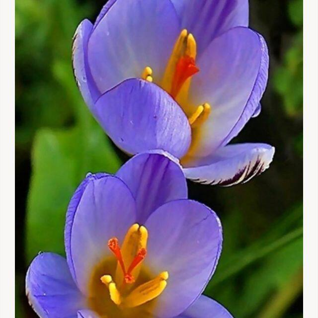 春天的花朵__1967