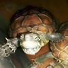 龟啊龟啊龟