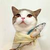 薛定谔的猫效应。
