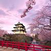 樱花の舞:值得单曲循环的日语女声