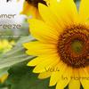 Summer Breeze Vol.4 In Harmony