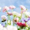 【花】#hana#那些和花相关的日语歌