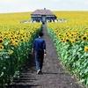 在郊外的田野上 春天花朵与微风
