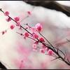古韵悠长,我爱的东方味道。(轻音乐)(第27辑)