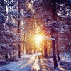 冬季已至 温暖的是偷看你在寒冬里的笑颜