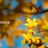 对的时光,对的音乐——聆听秋日の歌