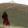 藏傳佛教 ~ 帶你到淨土的聲音 तिब्बती बौद्ध पवित्र भूमि ~ ध्वनि करने के लिए ले - पारंपरिक उपयोगकर्ताओं