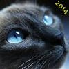 BlueEyeCat 2014H