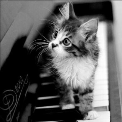 钢琴上の猫