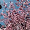 春天裡的中國風