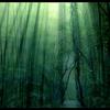 大地的挽歌 • 森林  翠泉 秘境