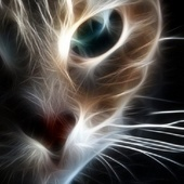 Cat Zo